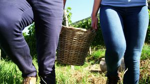Low section of couple walking with basket full of apples in vineyard