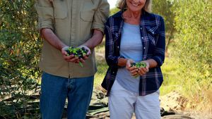 Happy couple holding harvested olives in hand 4k