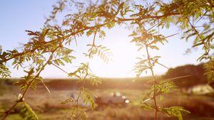 Tree branch on a sunny day 4k