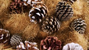 Pine cones and straw arranged during christmas time 4k