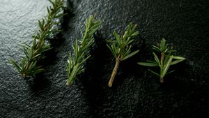 Rosemary on black background 4k