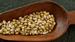 Coriander seed spilling out of a wooden scoop 4k