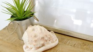 Pot plant, seashell and black picture frame on table 4k