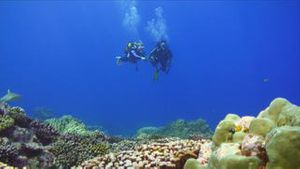 Under Water Stock Footage