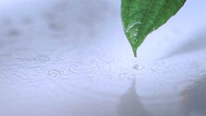 Small drizzle falling in super slow motion on a leaf