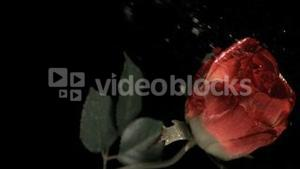 Red rose being sprayed in super slow motion