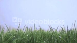 Grass in super slow motion receiving water