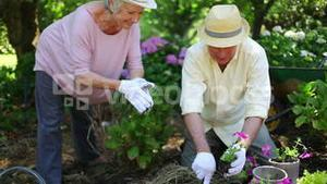 Retired woman giving flower to her husband