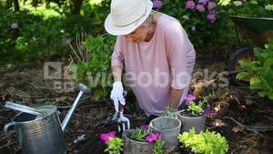 Retired woman planting flowers