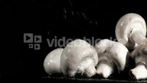 Mushrooms in super slow motion receiving water