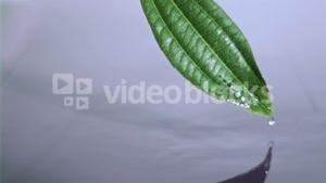 Drop water slipping in super slow motion from the leaf