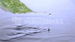 Drops water elapsing in super slow motion from the leaf