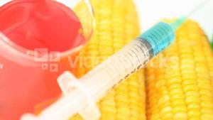 Sweet corn being placed under a syringe