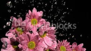 Downpour in super slow motion falling on beautiful flowers