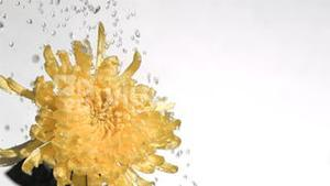 Yellow flower in super slow motion being sprinkled