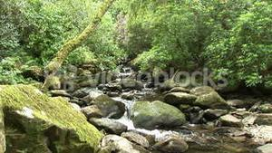 Forest with a Stream