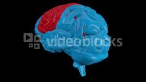 Revolving blue brain with highlighted sequenced sections