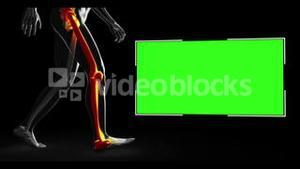 Walking human figure with various highlighted parts with copyspace
