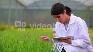 Woman standing at the greenhouse holding a tablet pc