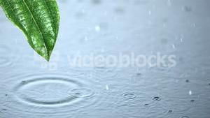Raindrops on water and running off green leaf
