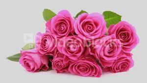 Focus on pink roses as a gift