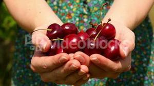 Close up on woman walking to camera holding cherries