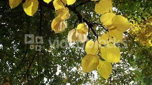 Yellow leaves blowing in the wind in a forest