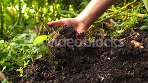 Hand pulling a potato from the soil