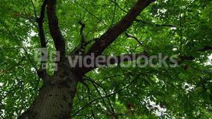 Low angle view of lush green tree