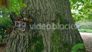Thick tree trunk