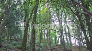 Secluded wooded area