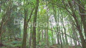 Tranquil wooded area