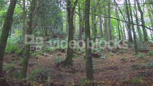 Peaceful wooded area