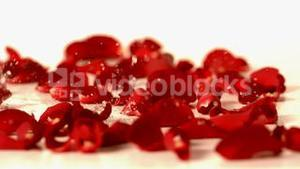 Water drops falling onto red rose petals