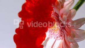 Blood pouring into water with pink flower