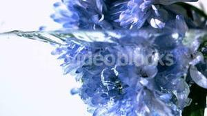 Blue flowers falling into water