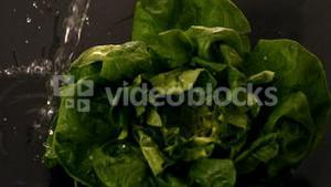 Water pouring over lettuce on black background