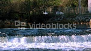 Seagull flying over a waterfall