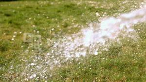 Water spraying on the grass