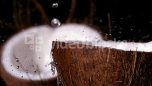 Water raining down on coconut on black background