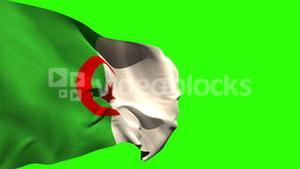 Large algeria national flag blowing
