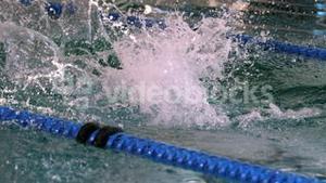 Fit female swimmer diving into swimming pool