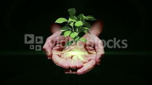 Hand presenting digital green plant growing