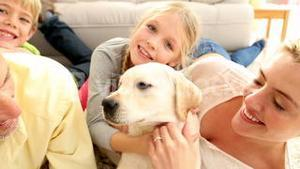 Happy family playing with labrador puppy on the rug