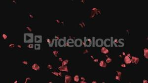 3D Animation of Rose Petals
