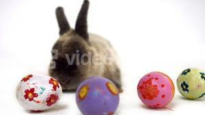 Easter bunny with colourful eggs