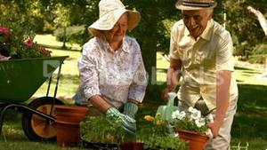 Happy older couple gardening together