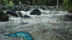 BUTTERFLY AT A WATERFALL