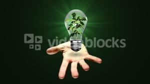 Hand presenting light bulb with plant