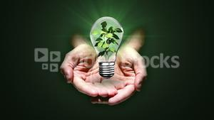 Hands presenting light bulb with plant